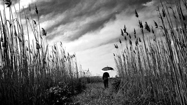 Canne e pioggia