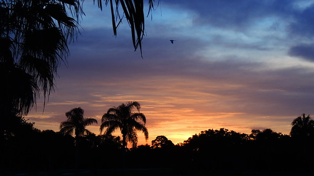 Bradenton Sunrise