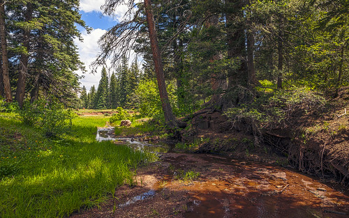 newmexico green nature grass creek forest landscape woods evergreen nm