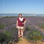 Royal_France_Summer09_Lavendar Field in Aix