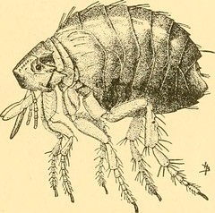 "Image from page 378 of ""Sanitary entomology; the entomology of disease, hygiene and sanitation"" (1921)"