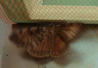 fil(et) à papillons 14623385168_613fb73d20_n