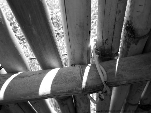 Cerca, bambu, formigas