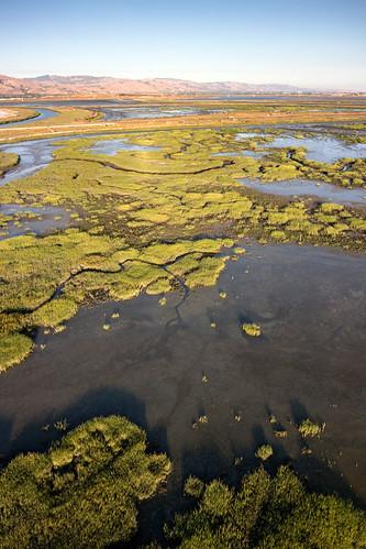 Salt Pond A21 - July 2014