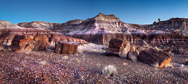 Jasper Forest- Petrified Forest National Park