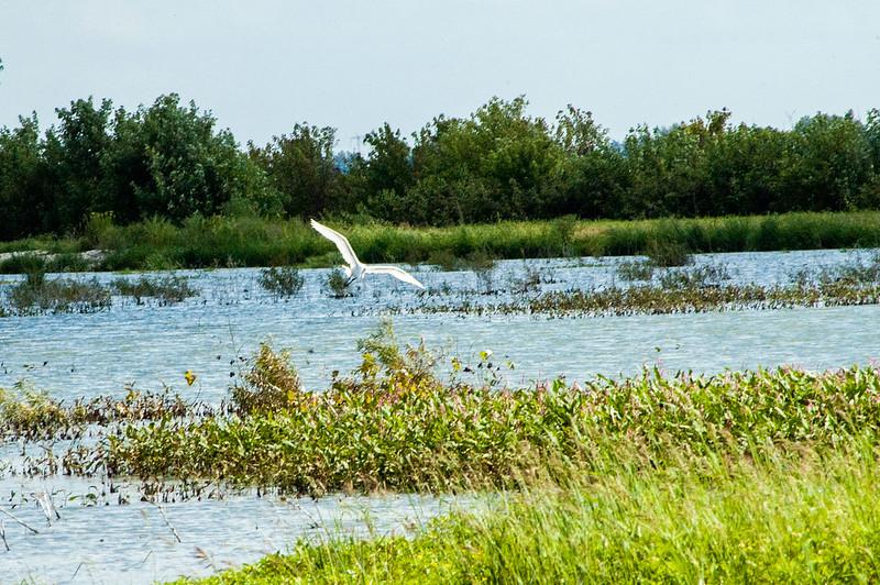 Goose Pond Fish & Wildlife Area - August 12, 2014