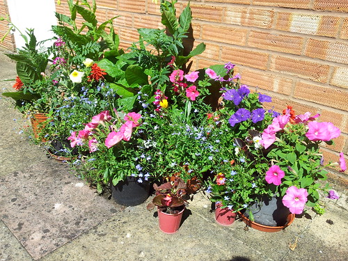 pots filled with brightly-coloured flowers