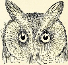 "Image from page 43 of ""Color key to North American birds"" (1903)"