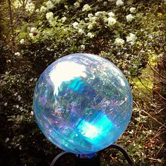 New gazing ball and white hydrangas in back ground....psst...$15 at Rite Aid.