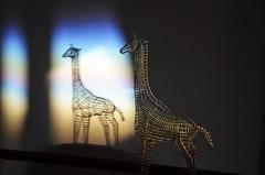 45 - Shadow Giraffe