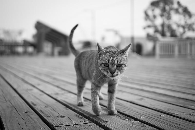 Cat Memories 2014/08/07