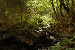 L'Auxois au cœur de la forêt