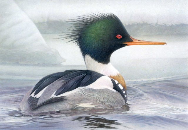2014 Federal Duck Stamp Art Contest Entry 83