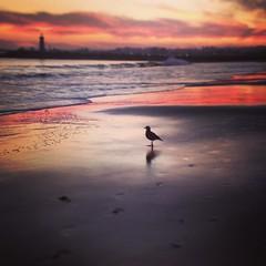 I like short to medium walks on the beach.