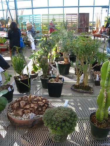 Odd Plant Sales - Sky Nursery
