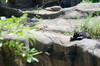 20140823-Cleveland-Zoo-Trip-3377