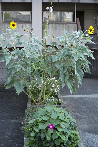 Semi-Left Plant