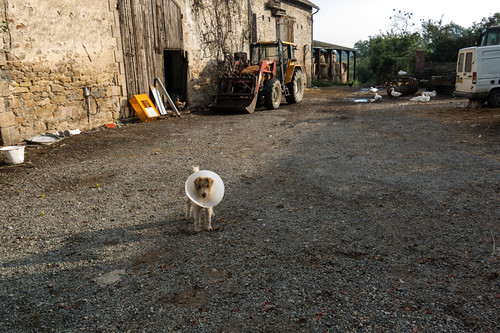 Dog in the barnyard