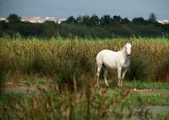 Espais naturals Delta del Llobregat