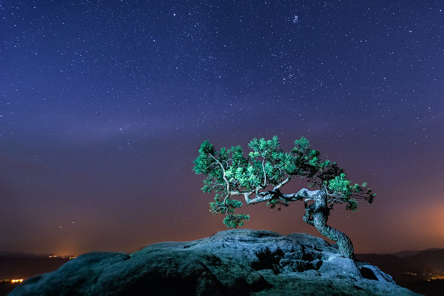 Old Pine under the Stars