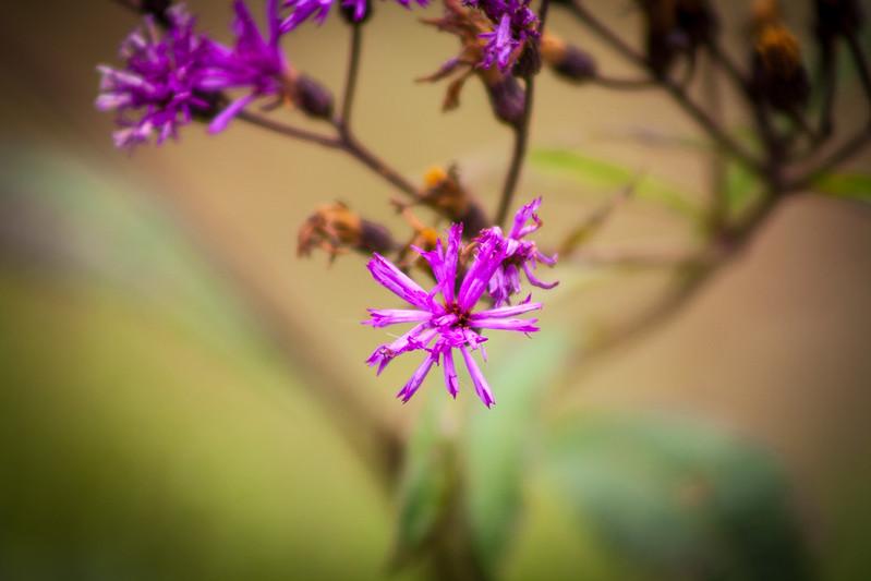 flowertwenty