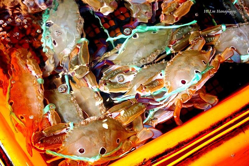 西北萬里蟹 (37)