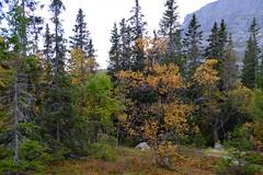 Høsten 14