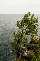 Tree, Silver Bay