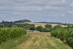 Chemin entre végétation et champs de maïs