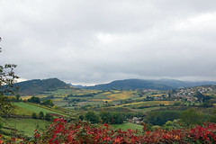 2016-10-24 10-30 Burgund 182 Berze-La-Ville - Photo of Clessé
