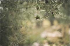 desnuda en la tarde verde