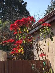 That time of year again. Seasons Greetings