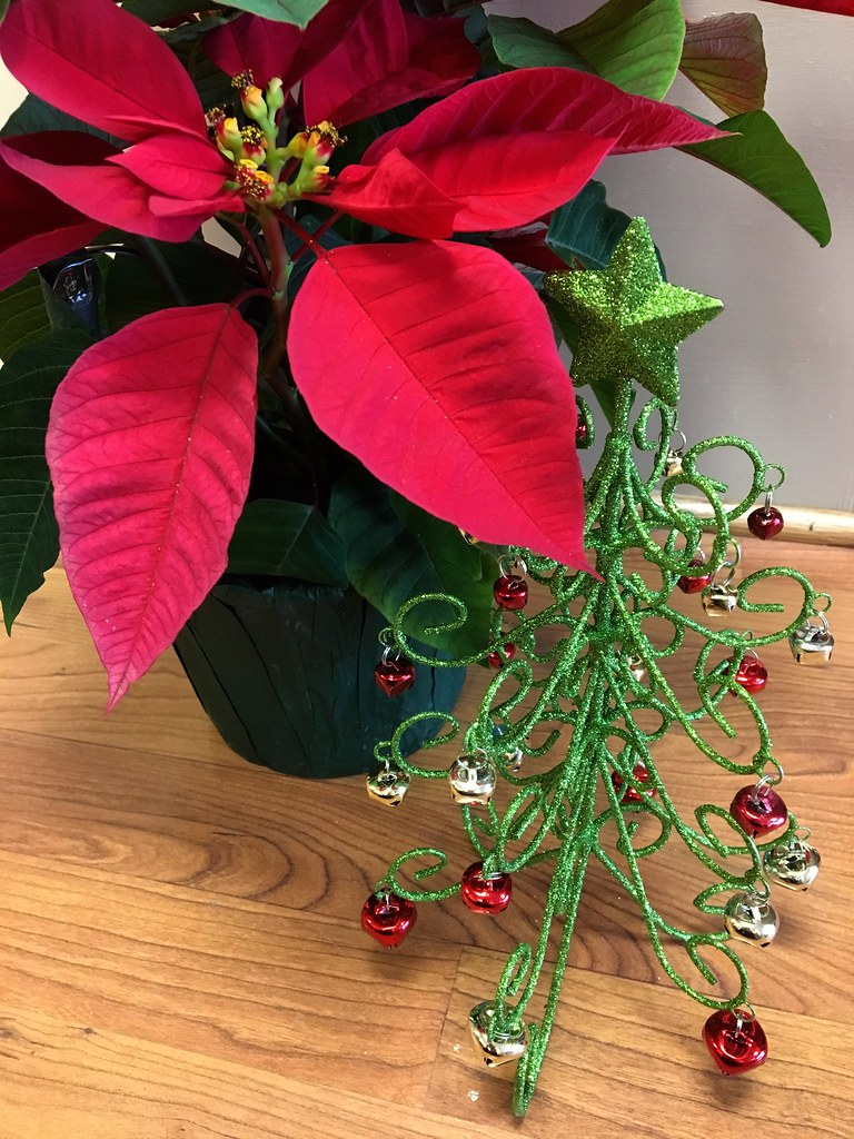 Holiday Fun Facts Caring For Poinsettias