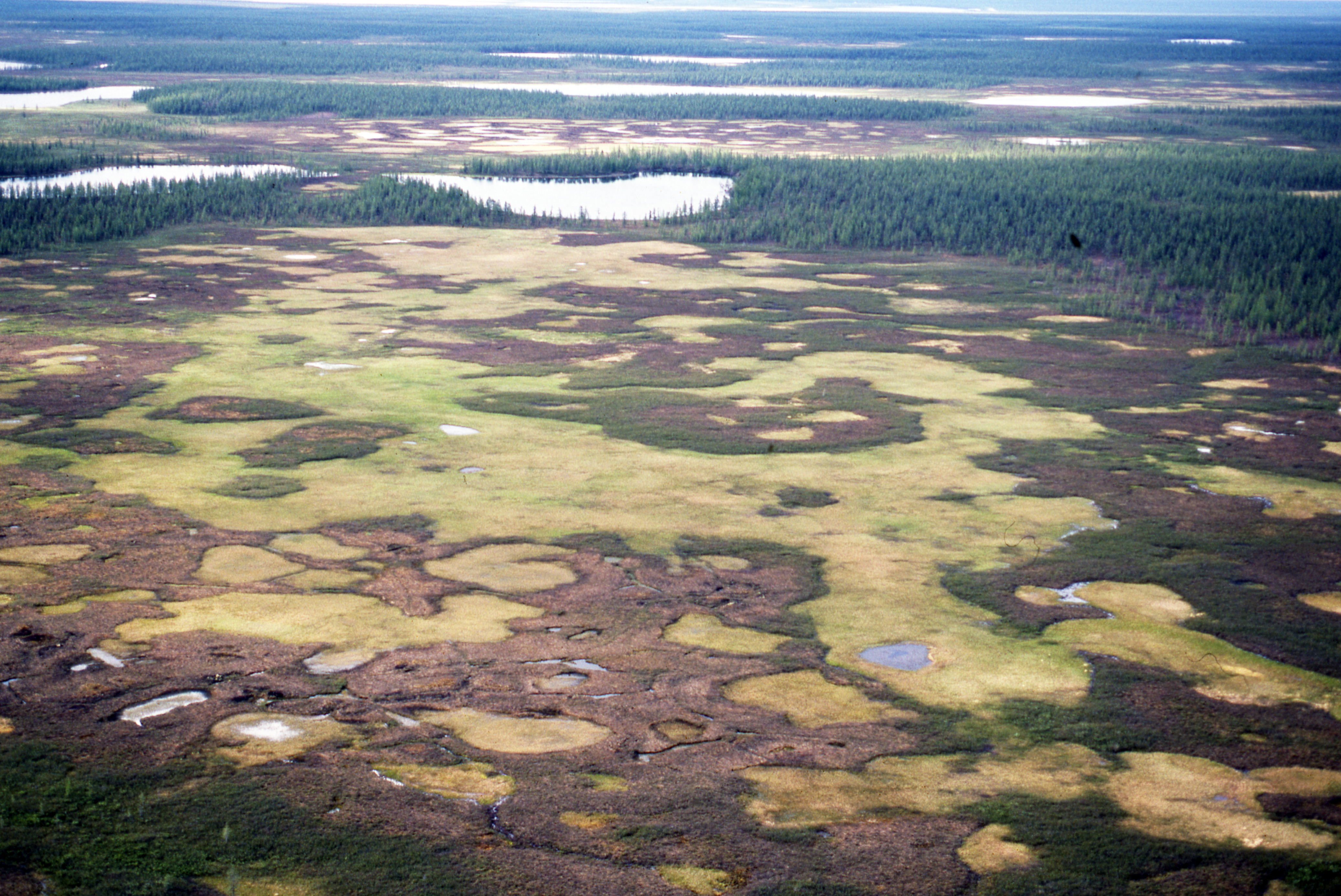 время картинка болота в тундре прием