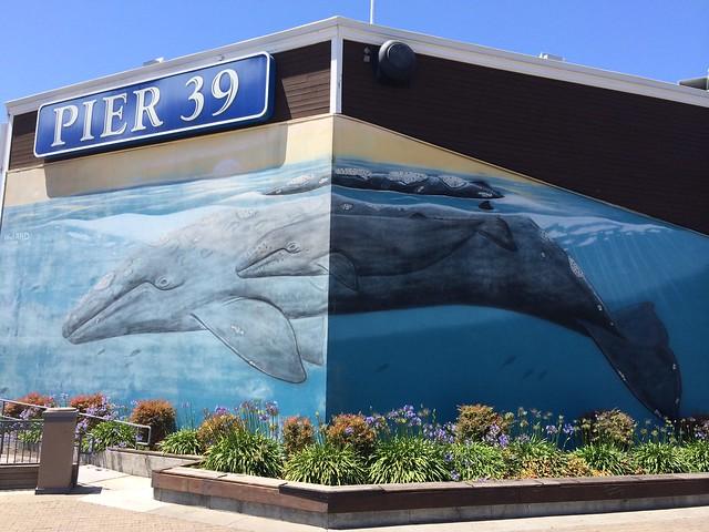Humpback whale mural, Pier 39