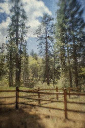 trees nature lensbaby forest fence landscape textured flypaper kimklassen