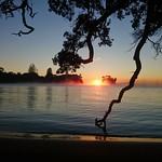 Waiake Beach