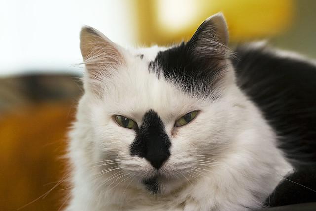 kitty 017