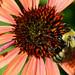 Bee Happy by jamey15
