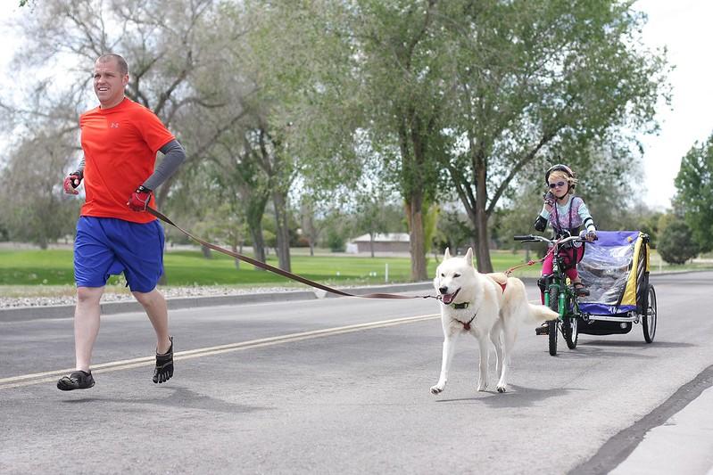 Finally, I have pics of all 4 dogs (2 Huskies + 2 GSDs) bikejoring together! 14500127854_a9ef560af9_c