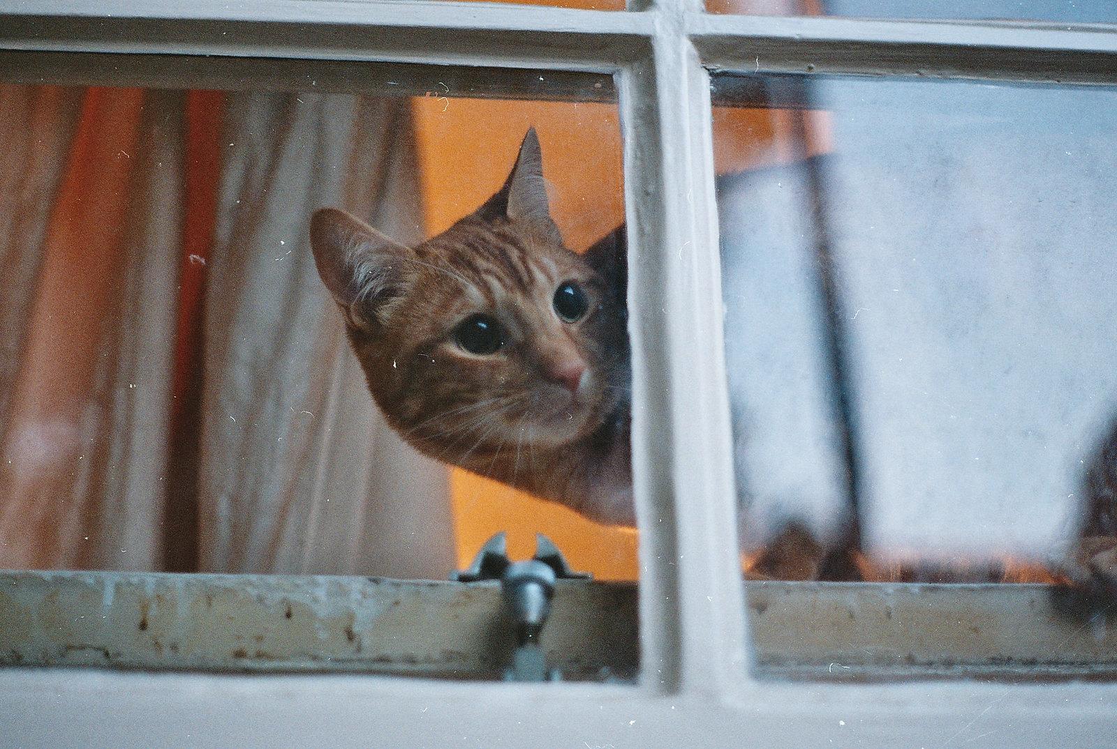analog cat photography