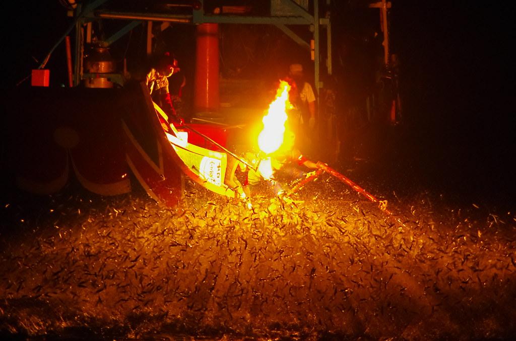 [一張流] 磺火捕魚