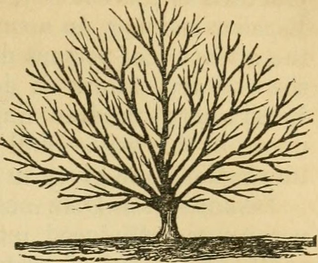 "Image from page 620 of ""The fruits and fruit trees of America; or, the culture, propagation, and management, in the garden and orchard, of fruit trees generally; with descriptions of all the finest varieties of fruit, native and foreign, cultivated in thi from Flickr via Wylio"