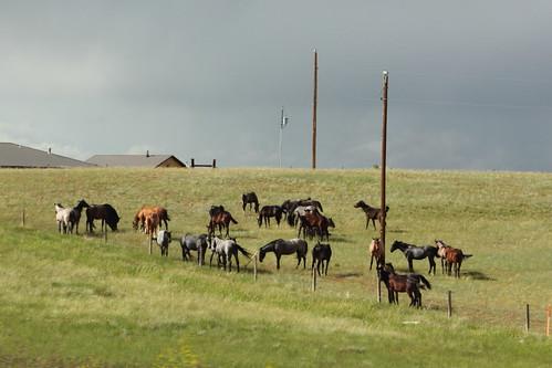 Coloradan horses