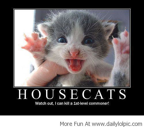 Best Funny Pictures,Funny Images,Funny Memes | House Cats!
