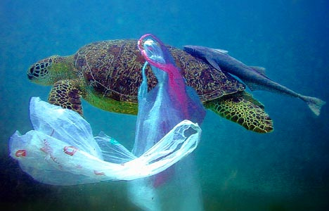 plastic killing turtles