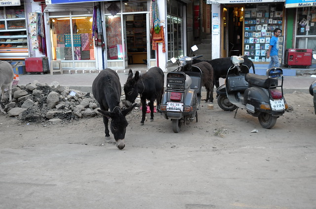 Leh, Ladakh, 06 Aug 2014. L062