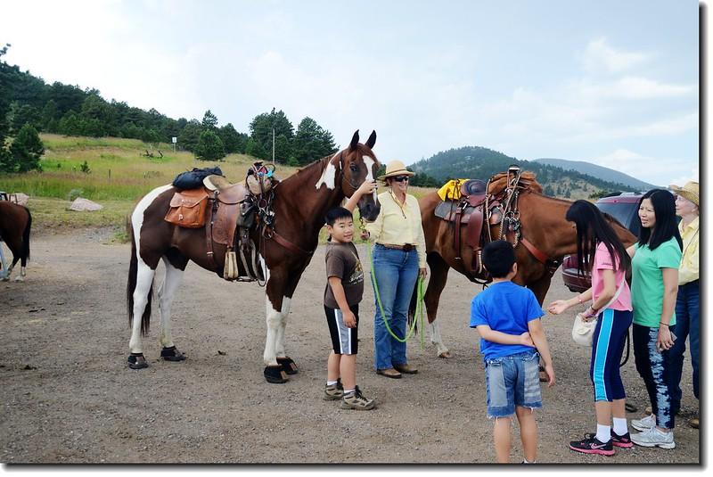 Horse Patting