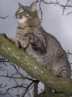 Cat Jumping on Tree