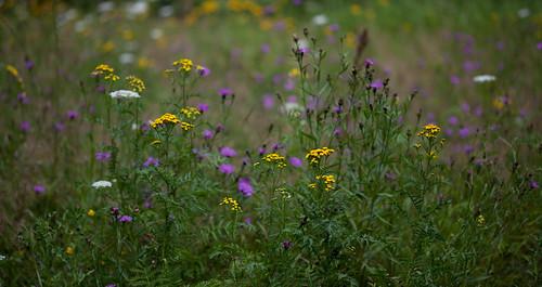 Blumenwiese - Part 1